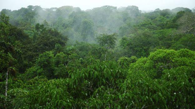 Selva de Perú