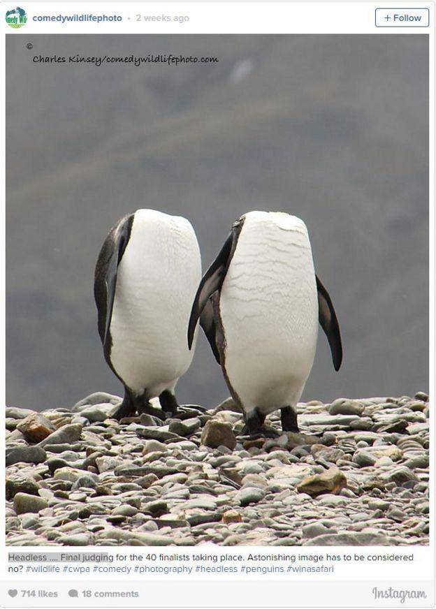 80 Koleksi Gambar Binatang Paling Lucu Gratis Terbaru