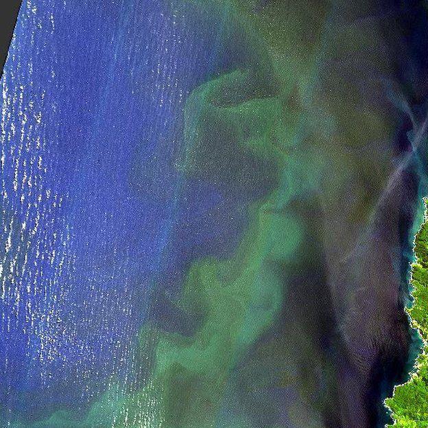 Algal bloom off the coast of Chile