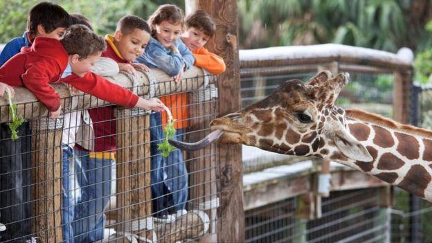 Niños jugando con una jirafa