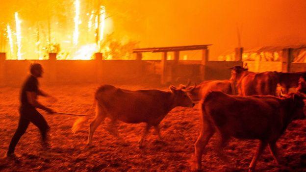 Men gather cattle during a forest fire in Vieira de Leiria, Marinha Grande, Portugal 16/10/2017
