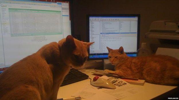 Gatos alrededor de la computadora en la casa de Matt Barrie