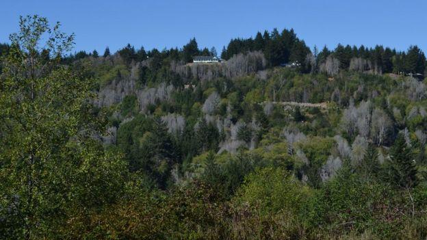 Bosques muertos en la cosa oeste de EE.UU.