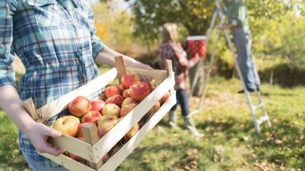 Familia recolectando manzanas