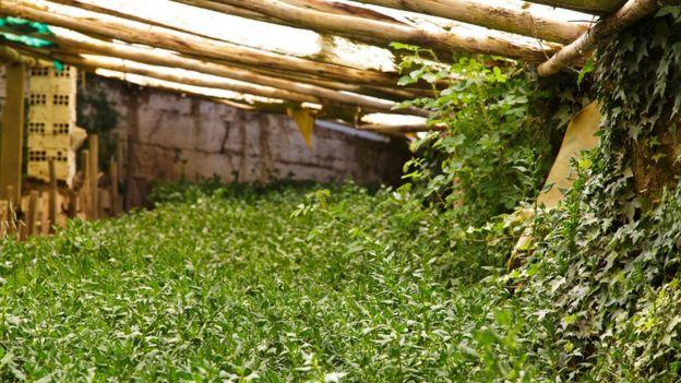Walipini, las ingeniosas huertas subterráneas