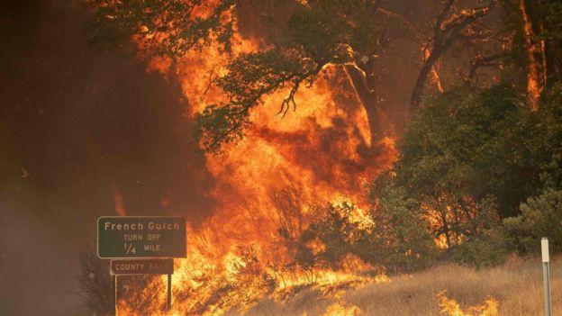 yanan ağaçlar.
