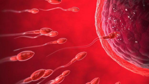 Ilustração de óvulo e espermatozoides