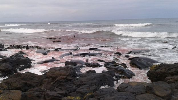 Blood in the sea around dead whales off Chatham Island, New Zealand