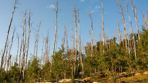 Drought-induced mortality of trees (Image: Martin Venturas)