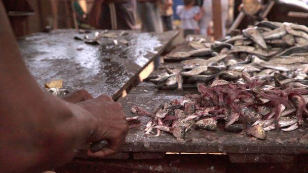 Pescador cortando sardinha na Venezuela