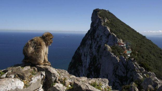 Macaco em penhasco de Gibraltar
