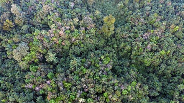 The forests of the Orang Rimba