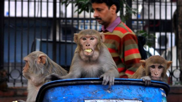 Monkeys in a rubbish bin
