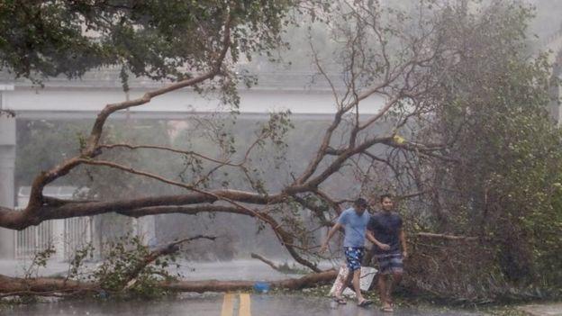 Árbol caído en Miami