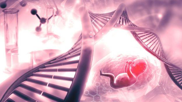 ADN del feto