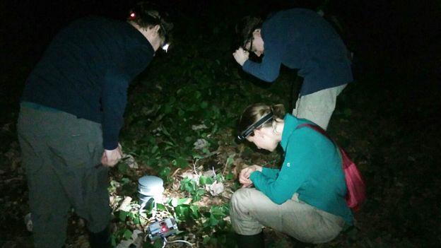 Investigadores examinando uno de los parlantes que usaron para reproducir los cantos de las ranas túngara macho