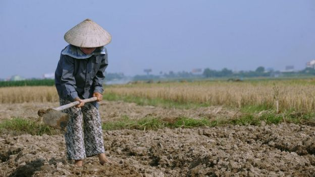 A woman farms land in Vietnam (file image)