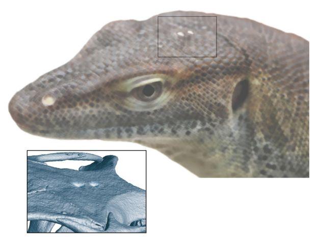 Un lagarto