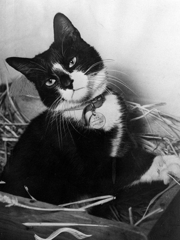 Кот Саймон со своей медалью
