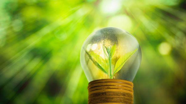 Planta dentro de lâmpada
