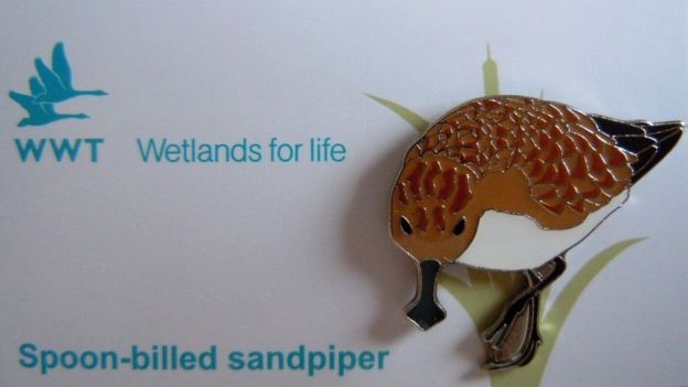 Spoon-billed sandpiper badge