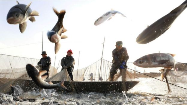 Pescadores en China.