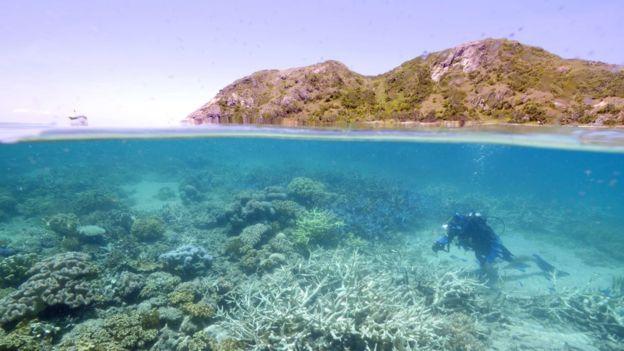 Airbnb也曾經在澳洲大堡礁舉辦類似活動。