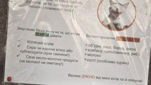 Список їжі, якою можна і не можна годувати котів