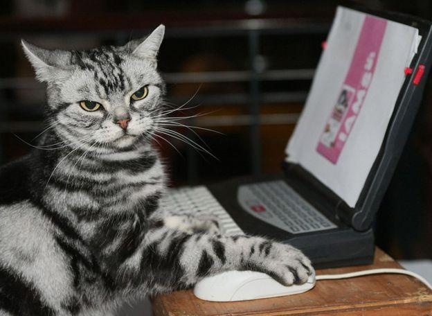 Un gato frente a una computadora