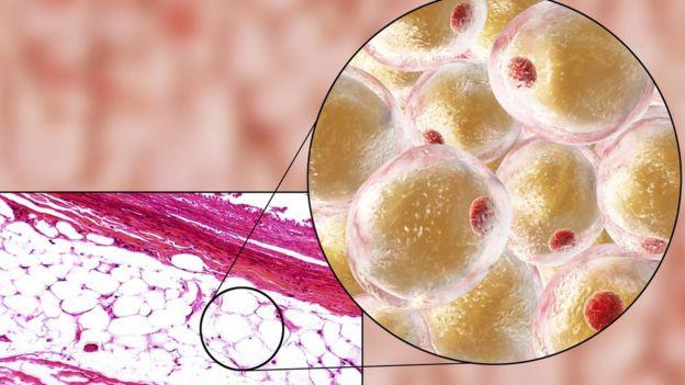 Representação de célula adiposa