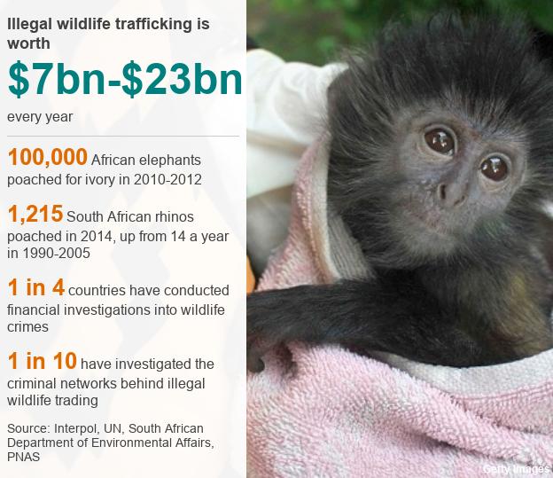 Illegal wildlife trafficking statistics