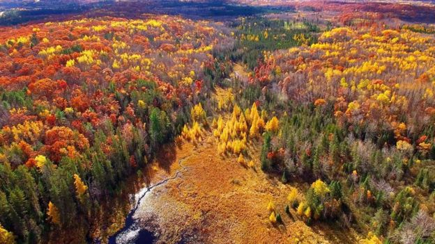 Bosque de Michigan