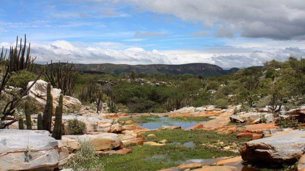 Vista da caatinga, com cactos, pedras e vegetação