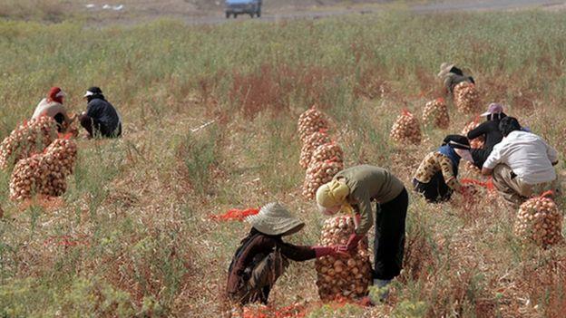 رئیس اتحادیه فروشندگان سبزی و میوه مشهد پیشبینی ککرد با افزایش قیمت پیاز، کشت این محصول در سال جاری افزایش یابد