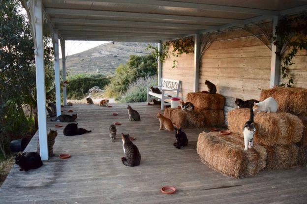 Gatos en el refugio God's Little People Cat Rescue