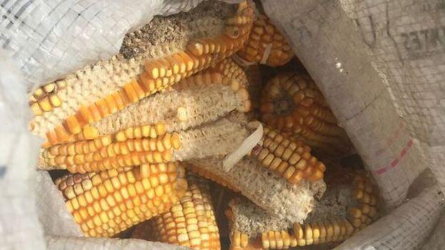 Corn cobs in a bag