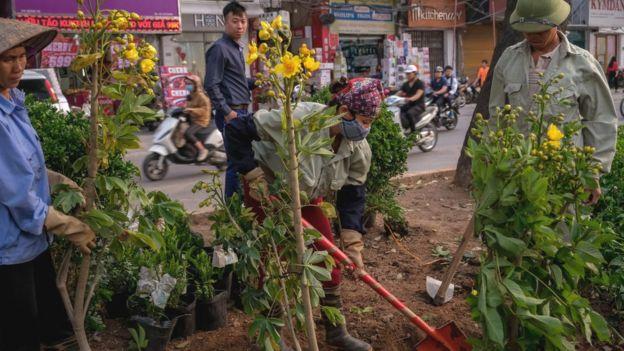 Nhiều nhân viên trồng thêm cây dọc đường Giảng Võ gần Đại sứ quán Mỹ trước cuộc hội nghị thượng đỉnh Trump-Kim hồi tháng 2