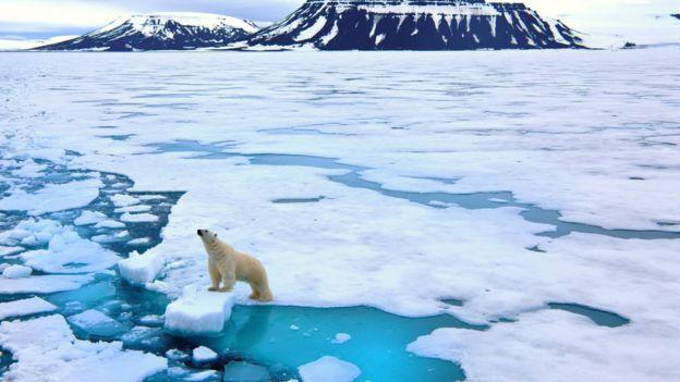 Paisaje congelado del Ártico con un oso polar.