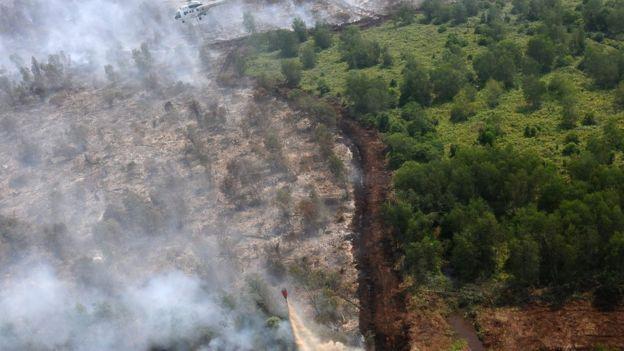 Kebakaran Hutan Kalimantan Tengah Warga Batuk Batuk