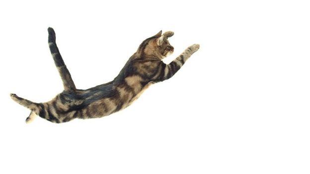 Gato cayendo.
