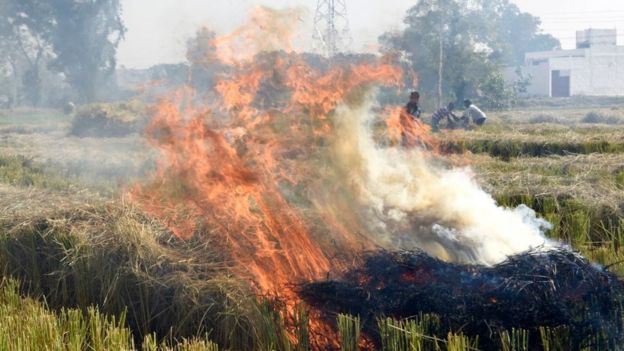 Crops burning in a field in India