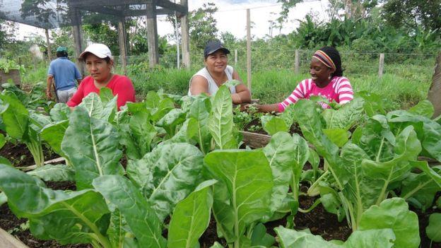Cultivo de vegetales