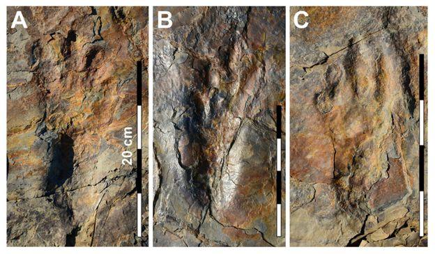 crocodile's footprint.