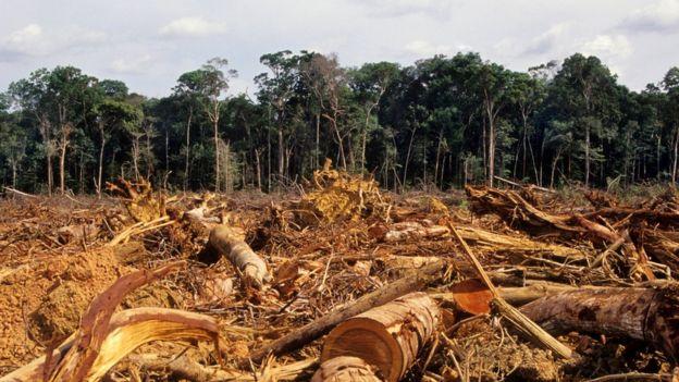 Área de floresta derrubada