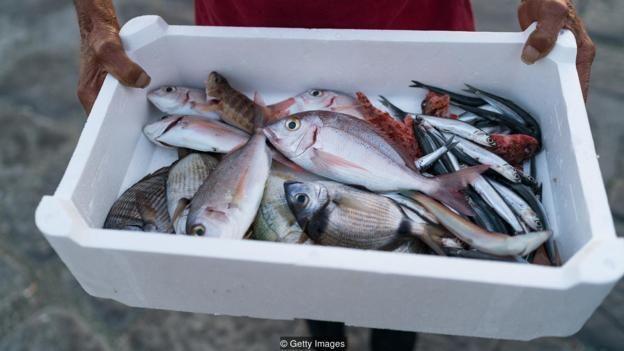 sampah, plastik, makanan laut, seafood, ikan