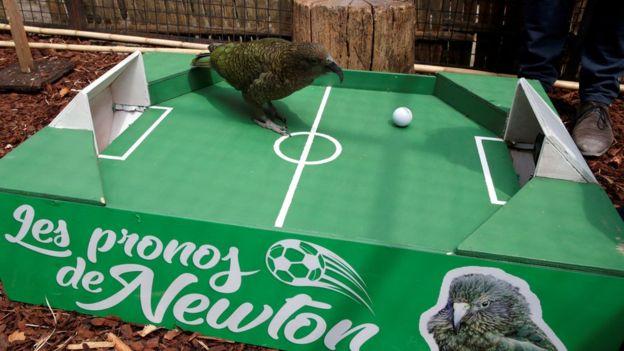 Newton, el loro, predijo la victoria de Francia sobre Uruguay. ¿Será?
