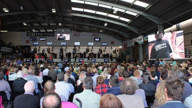 Pencampwriaeth cneifio Cymru, yr enillydd oedd Gareth Evans o Lansannan // Welsh Sheep Shearing Competition, won by Gareth LL. Evans o Lansannan