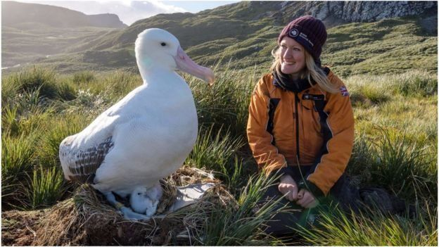 Lucy Quinn junto a un albatros Foto Blue Planet II