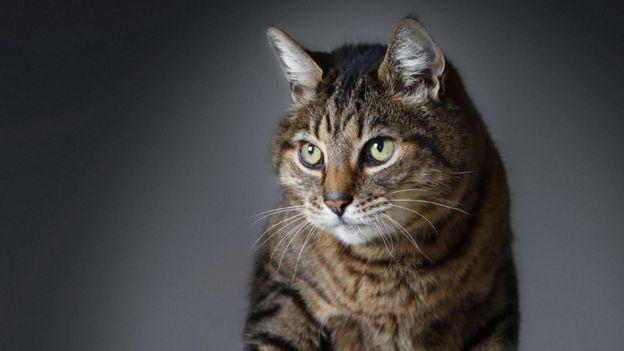 猫咪独处时也经常呜呜叫,据信这能够促进猫咪骨骼和组织生长。