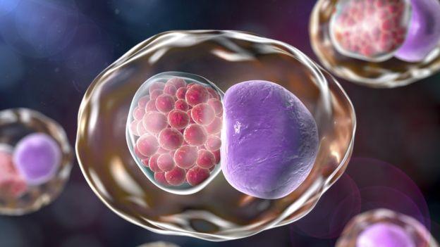 Ilustração mostra clamídia próxima a célula humana
